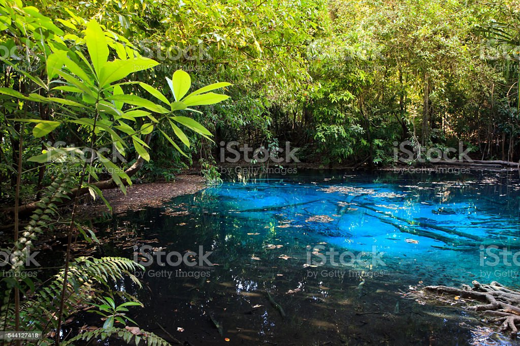 Emerald pool in forest at Krabi in Thailand. stock photo