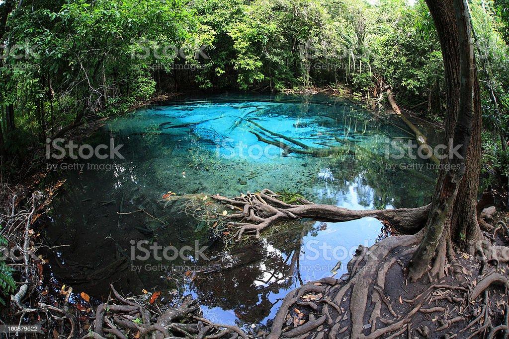 emerald pool in Krabi stock photo