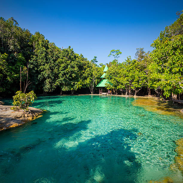 Emerald Pool is unseen pool in mangrove forest stock photo