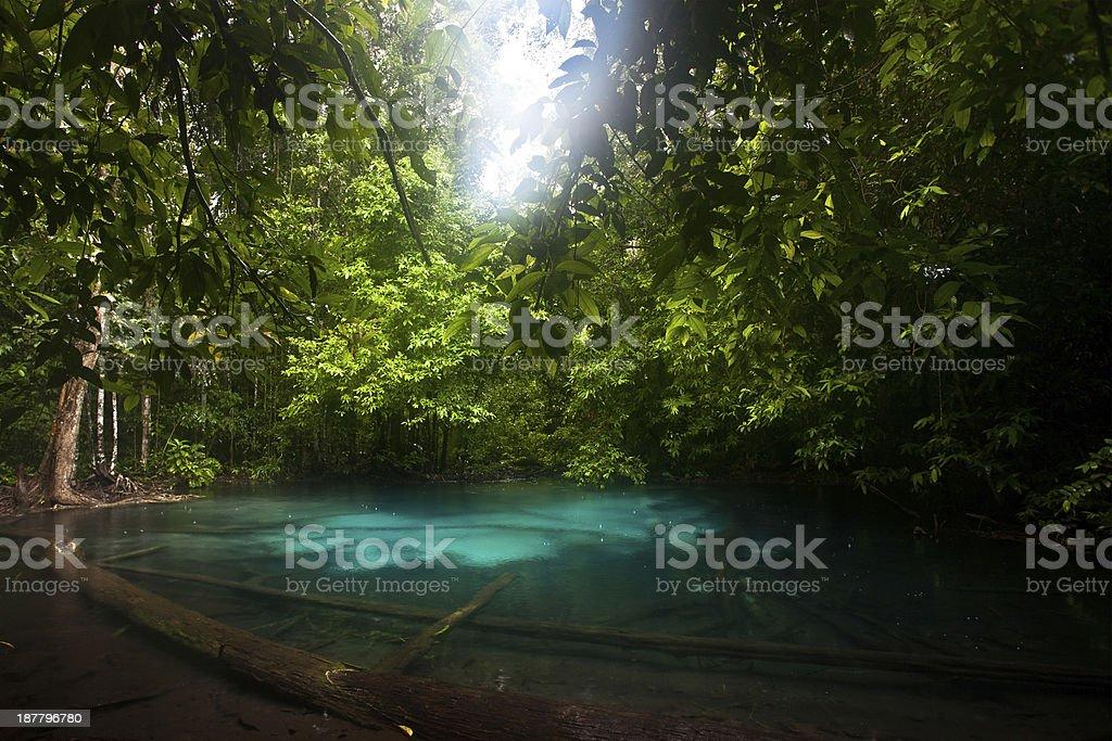 Emerald Pool. Krabi stock photo