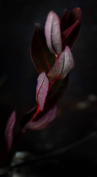 Emergent Leaves stock photo