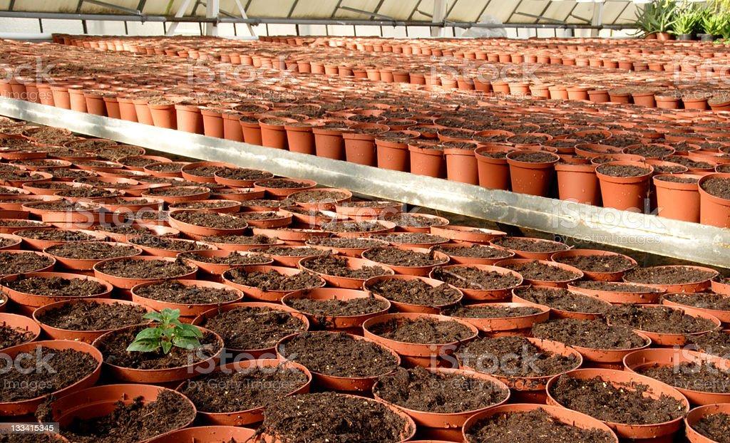 Emerging green royalty-free stock photo