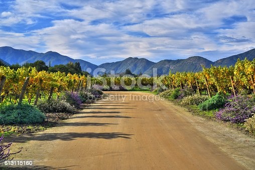 istock Emiliana Vineyards 613115160