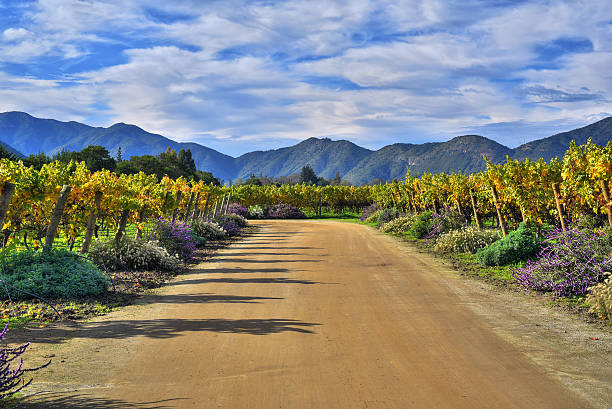 Emiliana Vineyards Emiliana Vineyards is the world's largest organic winery. Located in Chile´s main wine valleys, always producing the highest quality wines with a deep respect for our people and Nature. chile stock pictures, royalty-free photos & images