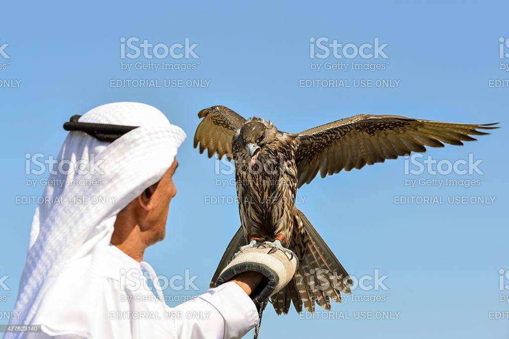 Emiratee with Saker Falcon stock photo