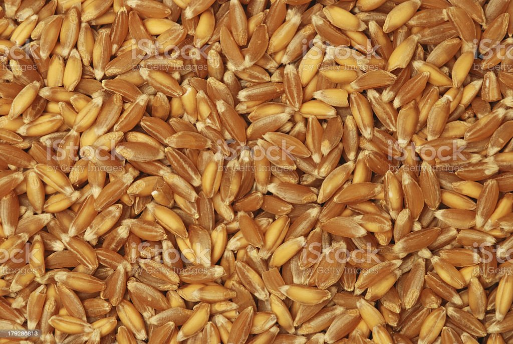 Emmer Wheat Grains royalty-free stock photo