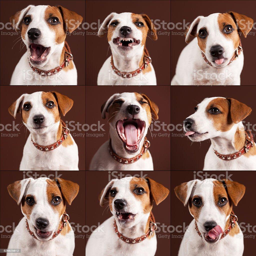 Emotional dog stock photo