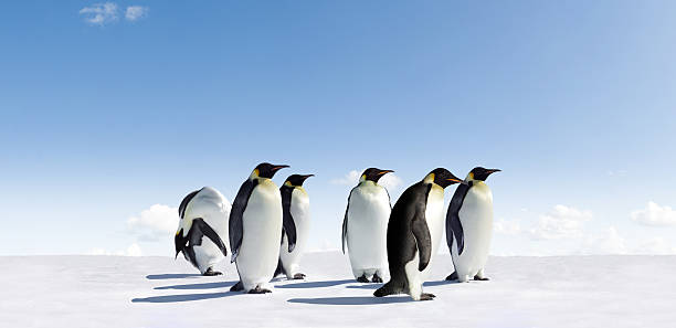 Emperor Penguins Emperor Penguins in Antarctica emperor penguin stock pictures, royalty-free photos & images
