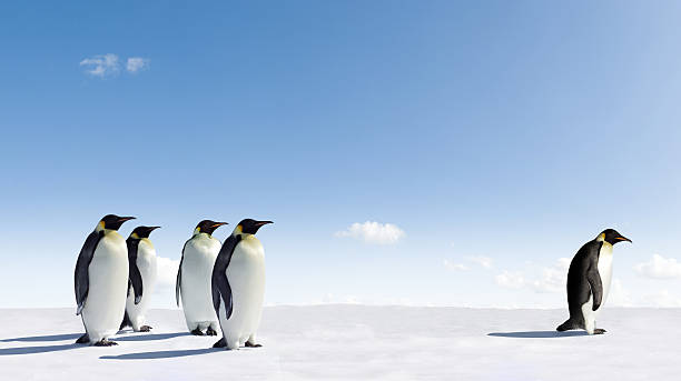 emperor penguins - disbarment stock pictures, royalty-free photos & images