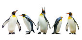 3 Adelie Penguins on iceberg and jumping into the Antarctic Ocean.