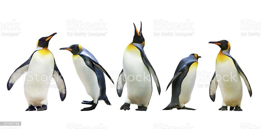 Emperor penguins stock photo