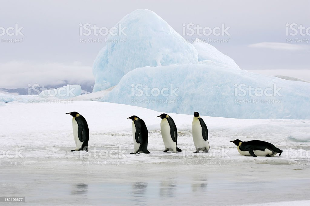 Emperors On Ice royalty-free stock photo