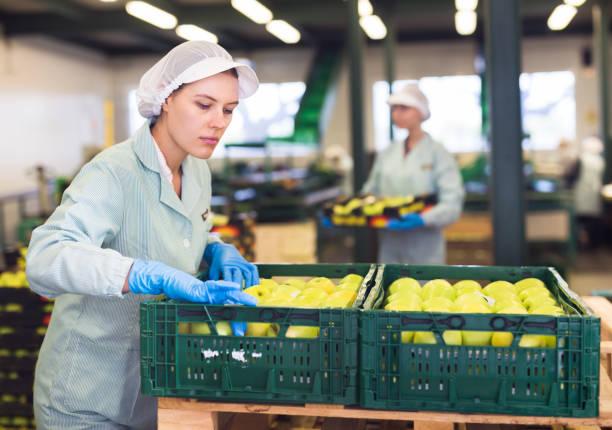 Mitarbeiter inspiziert Qualität der Äpfel in der Sortierfabrik – Foto