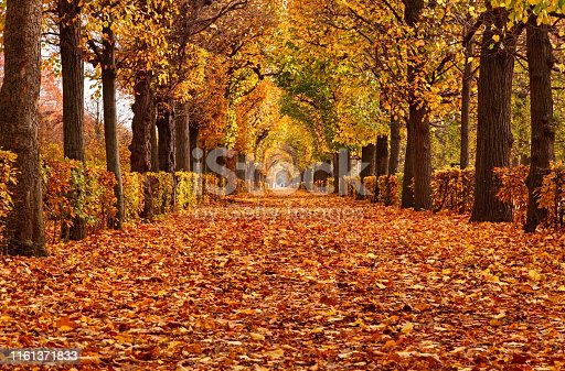 Empty road in autumn Park