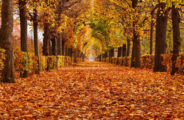 Empty alley covered by foliage in autumn park, Vienna, Austria Empty road in autumn Park autumn leaf color stock pictures, royalty-free photos & images