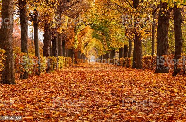 Photo of Empty alley covered by foliage in autumn park, Vienna, Austria