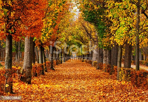 istock Empty alley covered by foliage in autumn park, Vienna, Austria 1265225847