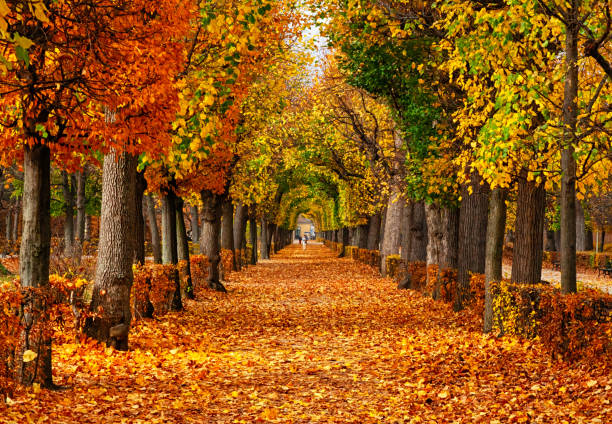 Empty alley covered by foliage in autumn park, Vienna, Austria stock photo