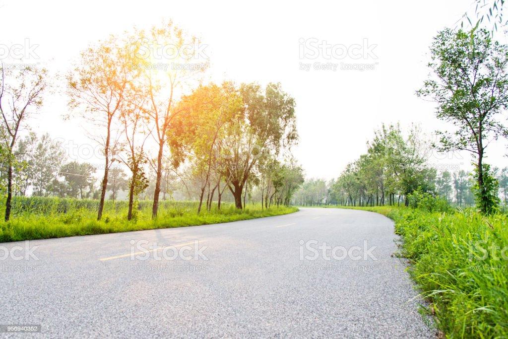 Empty asphalt road and tress.