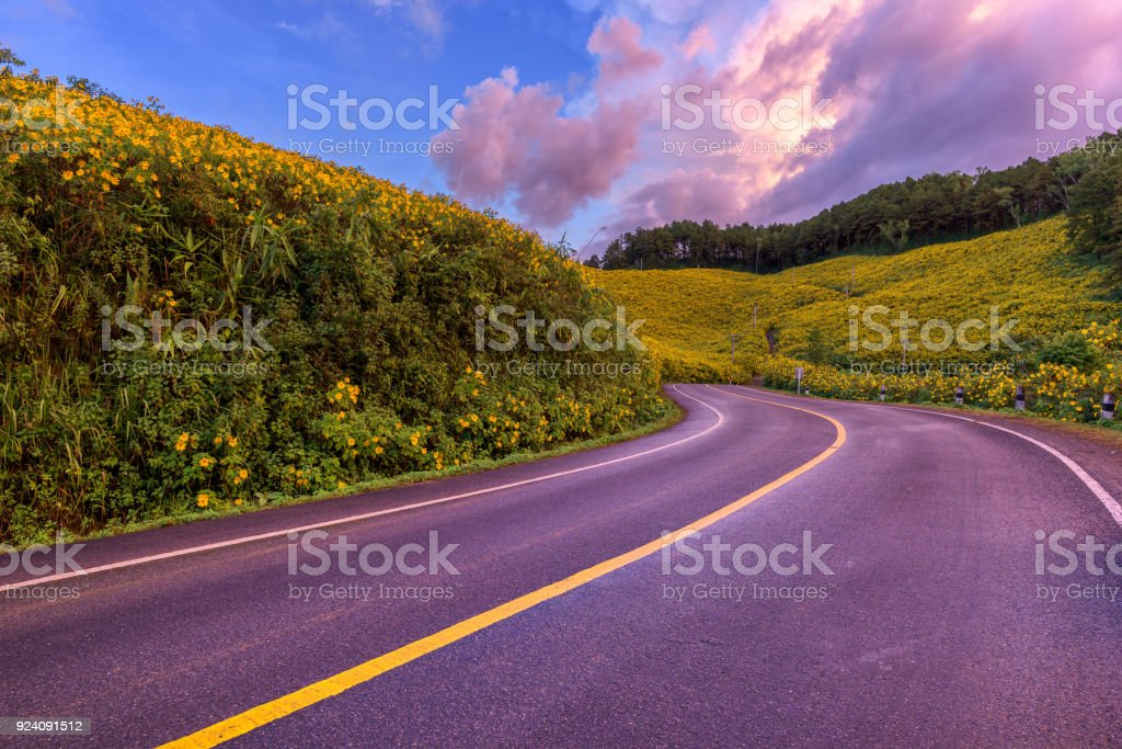 Empty asphalt road through Mexican sunflower flower field to sunset...