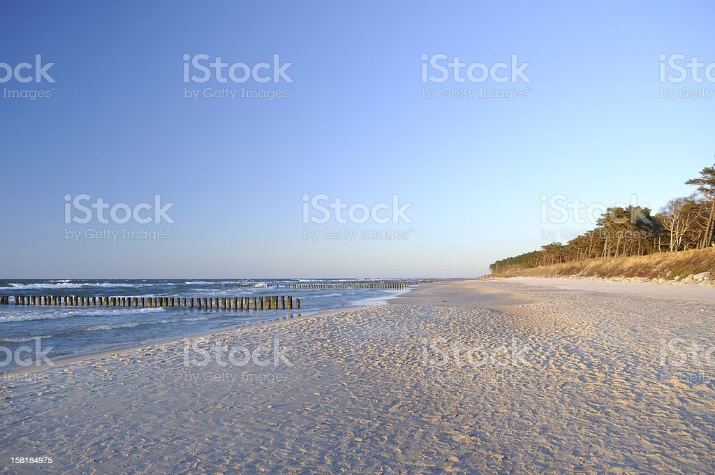 Empty beach with ocean shoreline and trees and blue sky royalty-free stock photo