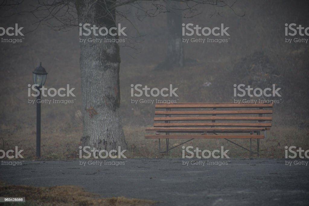 Banc vide au parc près de l'étang par jour de brouillard, scène minimaliste de saison froide. banc au bord du lac dans le brouillard dans la forêt. Banc près du lac de brouillard. Nature de l'Azerbaïdjan. - Photo de Arbre libre de droits