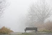 Empty Bench in the Pacific Coast Fog, Canada