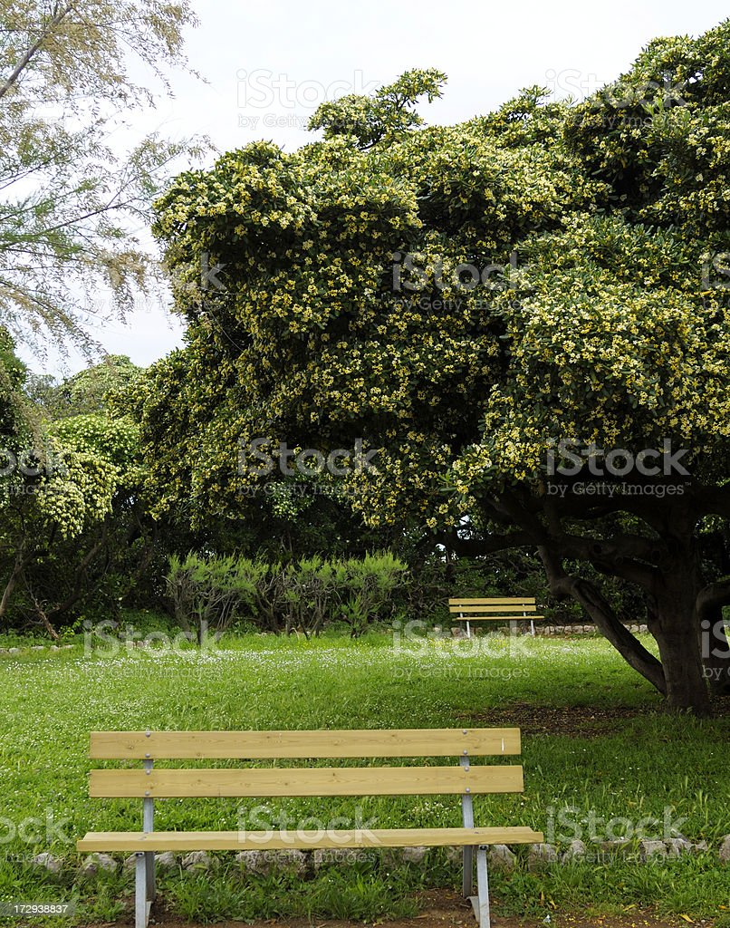 Empty Bench in the Park royalty-free stock photo