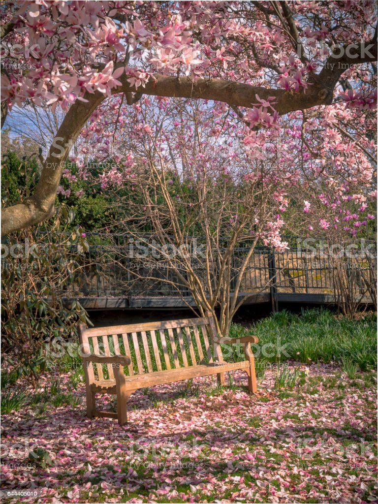 Empty Bench With Flowers In Spring Season Stock Photo More