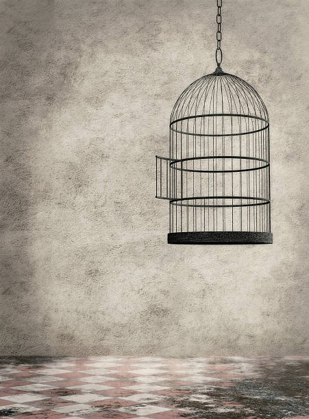 Image result for empty bird cage