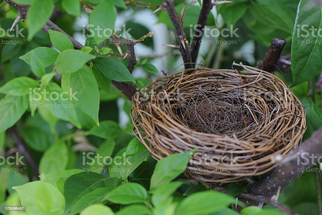Empty bird's nest in the tree with copy space stock photo