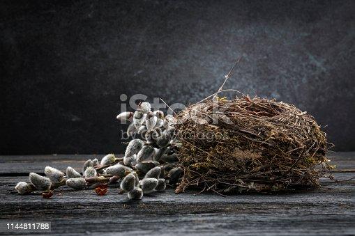 Empty Bird's Nest and pussy willow on dark background