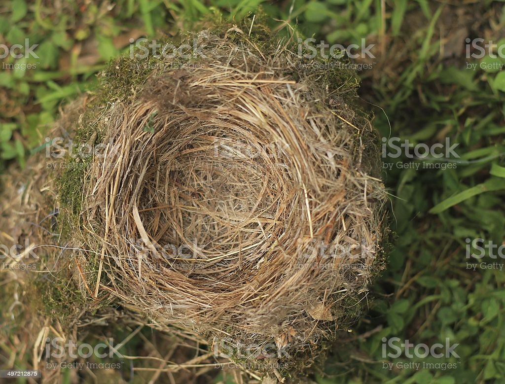 Empty Bird's Nest stock photo