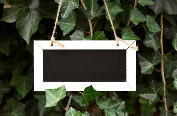Empty blackboard in green nature mock up with space for own text stock photo