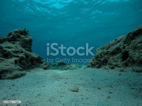Empty bottom of the sea with rocks, reef and sea urchins