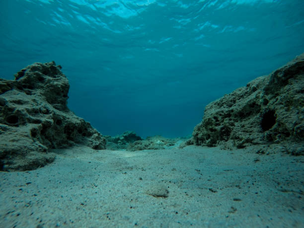 Empty bottom of the sea with rocks, reef and sea urchins stock photo