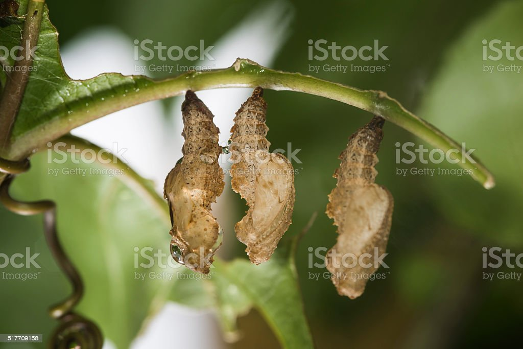 Empty bug moults stock photo