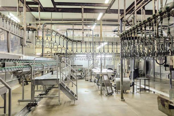 tom styckning workshop fjäderfä med takgående. fågel växt tillverkningslinjerna. produktion av kycklingkött. - livsmedelstillverkningsfabrik bildbanksfoton och bilder
