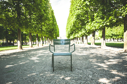 Empty chair in park with chestnut trees