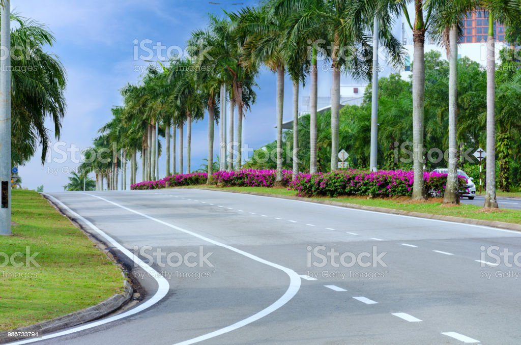 Empty city street with palm trees and flowers, asphalt road with...
