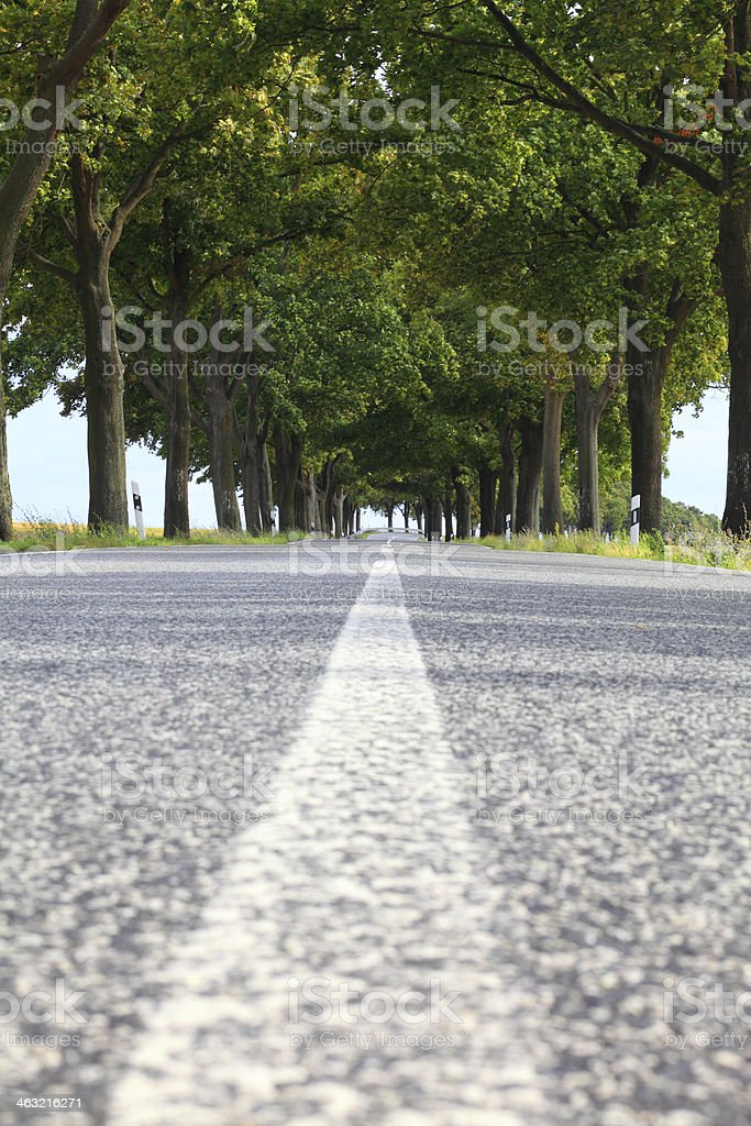 empty country road with tree avenue stock photo