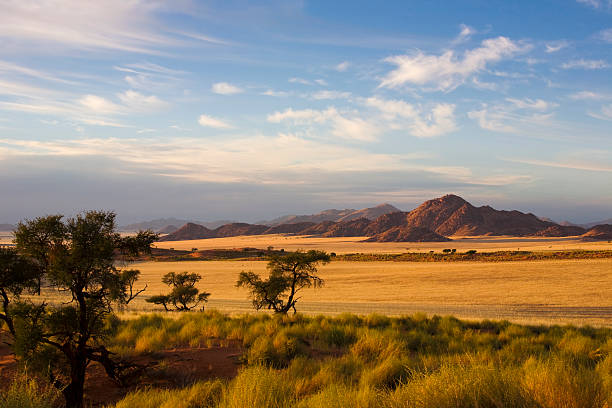 A empty country view of a field and trees Naukluft, Namibia, Afrika steppe stock pictures, royalty-free photos & images