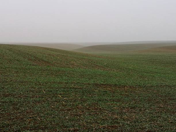 Empty crops field with a winter mist stock photo