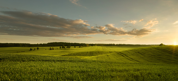 Panoramic view of empty masurian grass field at the sunset with copy space