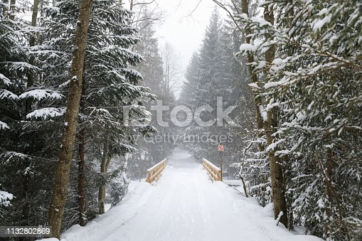 Empty forest road during the blizzard