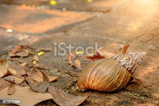 istock Empty garden snail shell on red brick wall and spring sunlight. close up 821872066