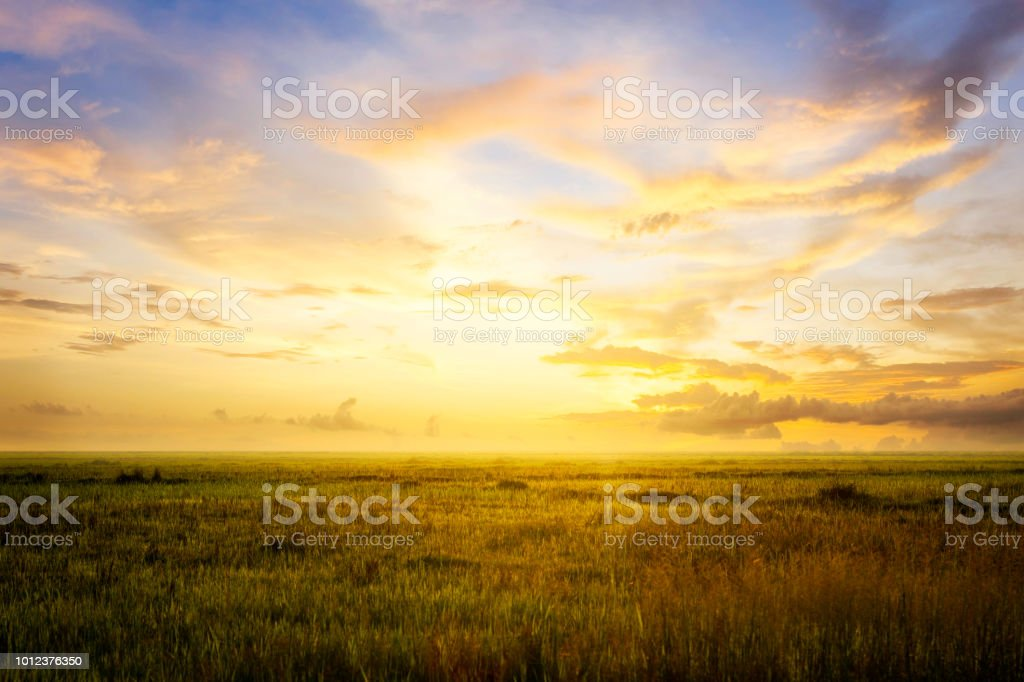 Empty grassland and sky at evening time foto stock royalty-free