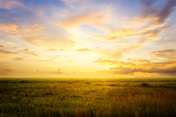 empty grassland and sky at evening time - skies stock photos and pictures