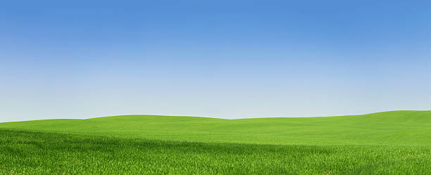 Empty green field, 108 Mpix XXXL panoramic view of an empty green field with copy space green golf course stock pictures, royalty-free photos & images