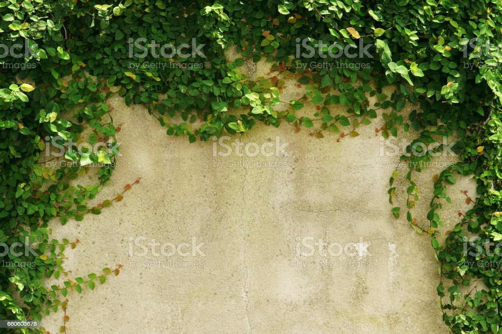 empty green grass wall frame as background royalty-free stock photo